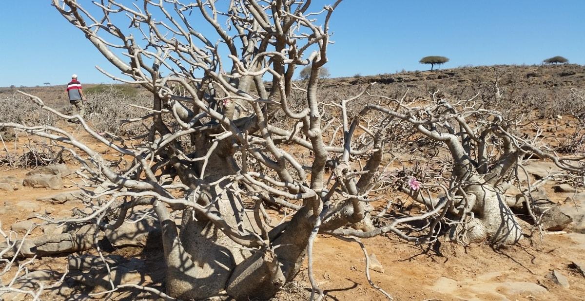 Landschaft im Oman