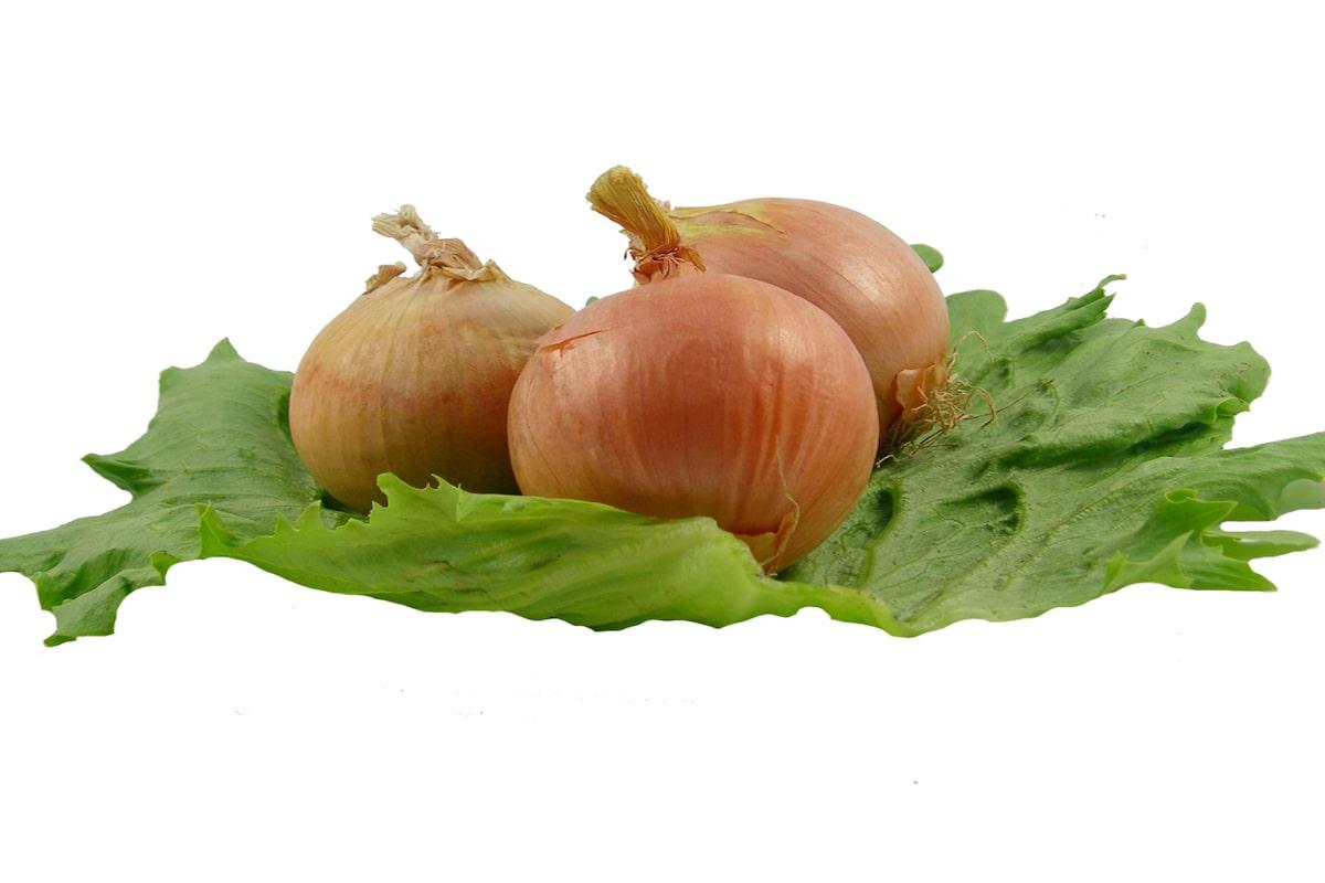 Zwiebel - Gemüse, Würzmittel und gesundes Lebensmittel