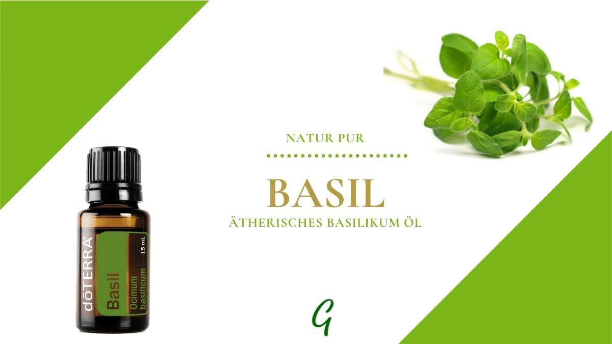 Basil - ätherisches Öl vom Basilikum