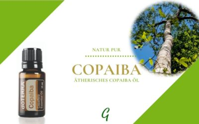 Copaiba -ätherisches Kopaiva Öl