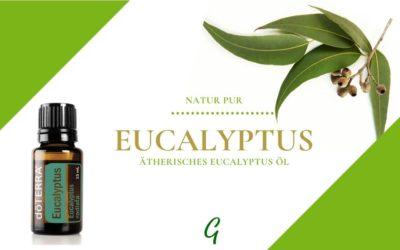 Ätherisches Eucalyptus Öl