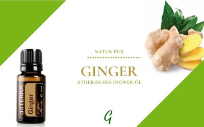 Ginger – ätherisches Ingwer Öl