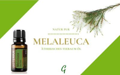 Melaleuca – ätherisches Teebaum Öl