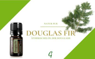 Douglas Fir – ätherisches Öl der Douglas Tanne