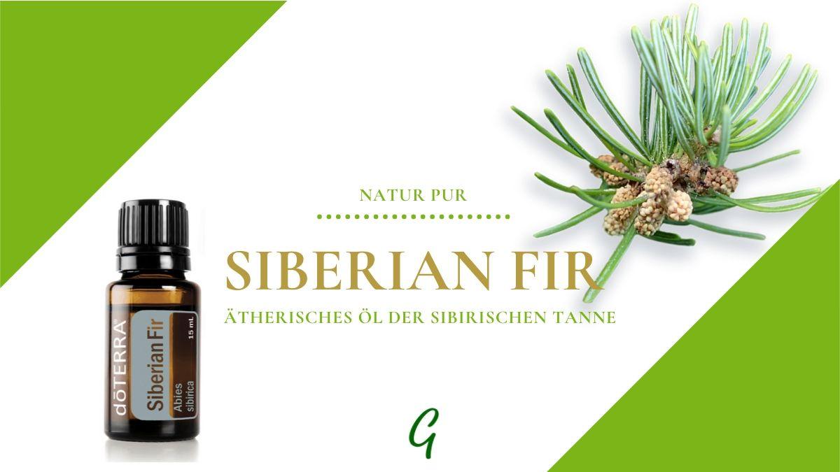 ätherisches Siberian Fir Öl - Sibirische Tanne von doTERRA