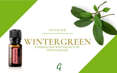 Wintergreen – ätherisches Wintergrün Öl