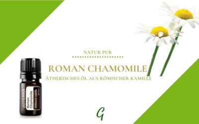 Roman Chamomile – ätherisches Öl der Römischen Kamille